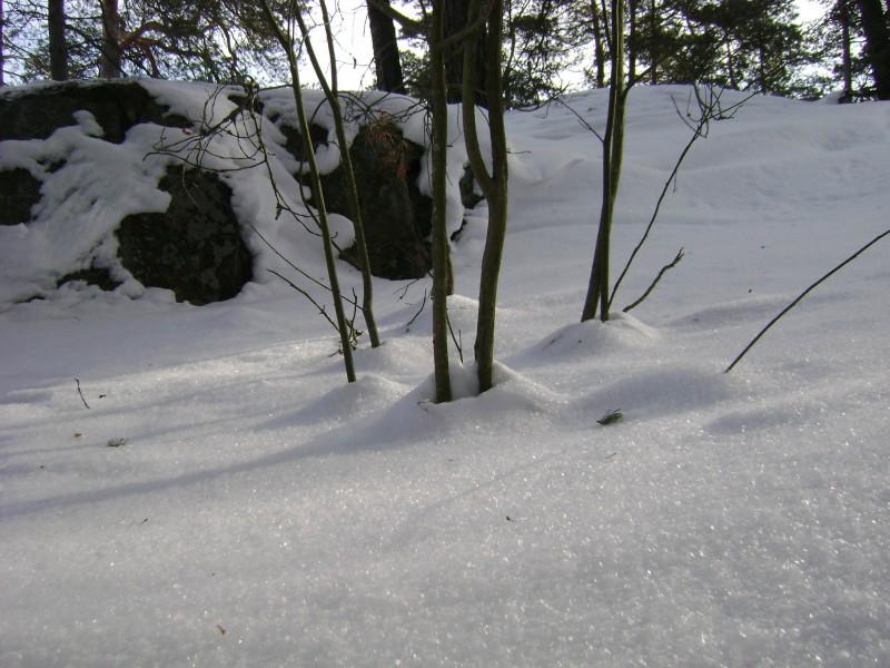 Ryssbergen0220-smådrivor