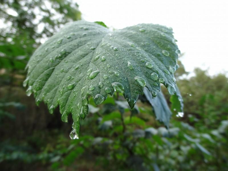 Ryssbergen0830-regndroppar