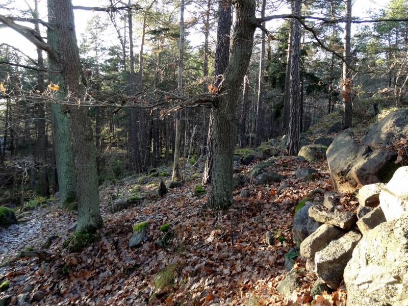 Ryssbergen1119-ekbacke